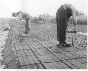 extrayendo turba del suelo